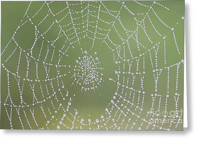Dewy Cobweb Greeting Card by Michal Boubin