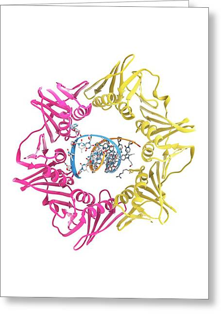 Dna Clamp And Dna Greeting Card
