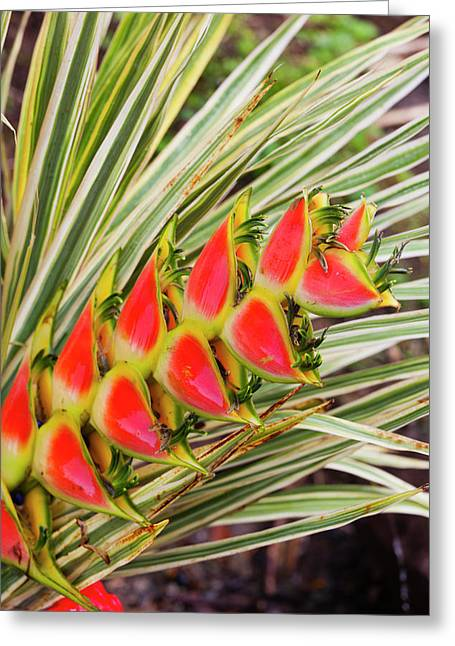 Dominica, Roseau, Tropical Vegetation Greeting Card by Walter Bibikow
