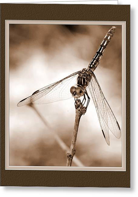 Dragonfly Close-up II Greeting Card
