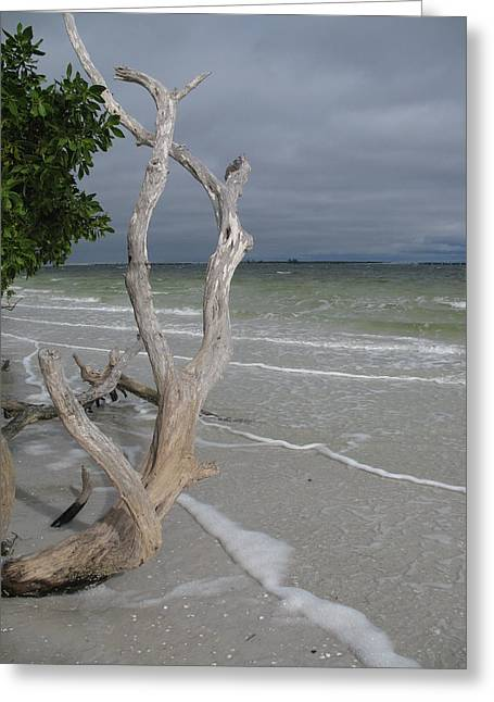 Driftwood On The Beach Greeting Card by Christiane Schulze Art And Photography