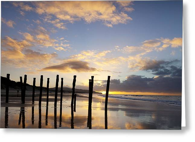 Dunedin St Clair Beach At Sunrise Greeting Card by Colin and Linda McKie