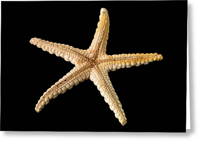 Elegant Starfish Greeting Card by Natural History Museum, London