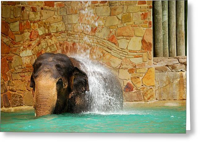 Elephant Greeting Card by Thea Wolff