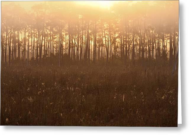Everglades Foggy Sunrise Greeting Card