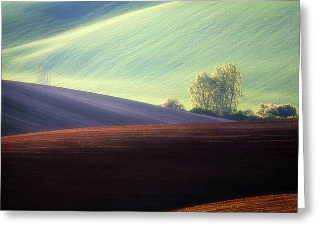 Fields... Greeting Card
