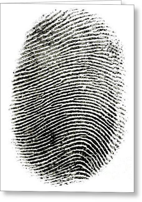 Fingerprint Greeting Card by Photo Researchers Inc