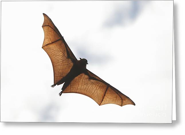 Flying Bat Greeting Card
