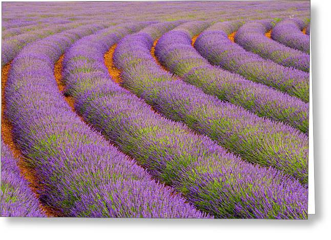France, Provence Region Greeting Card by Jaynes Gallery