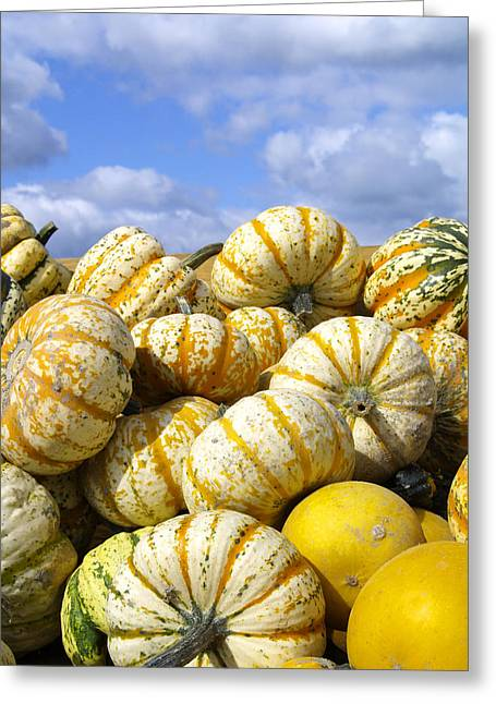 Frucht, Fruechte, Herbst, Kuerbis Greeting Card by Tips Images