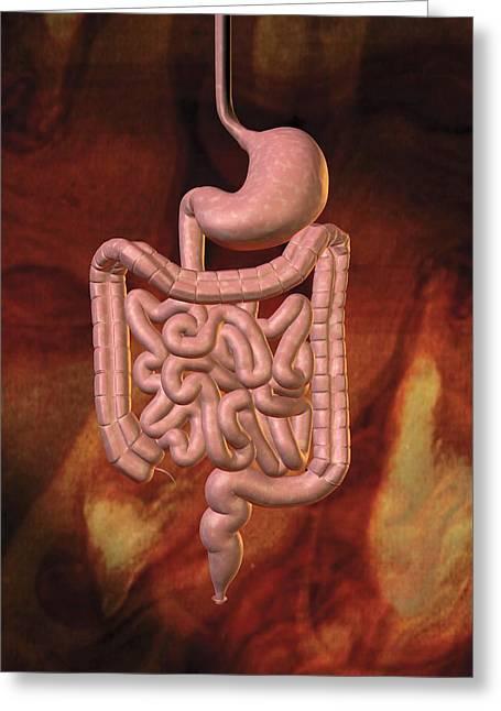 Gastrointestinal System Greeting Card by Harvinder Singh