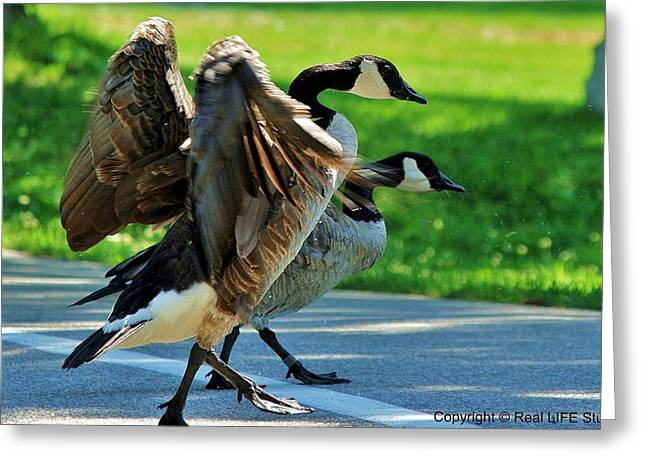 Geese Crossing Greeting Card