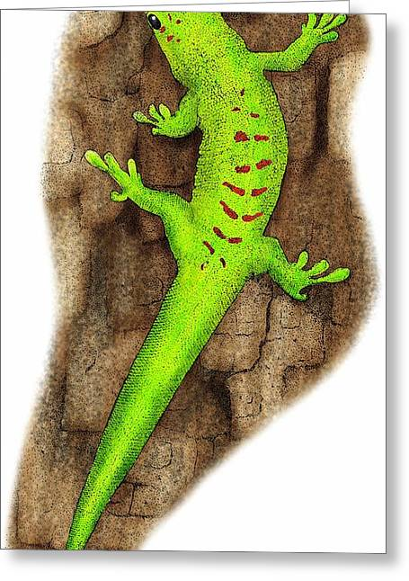 Giant Day Gecko Greeting Card by Roger Hall