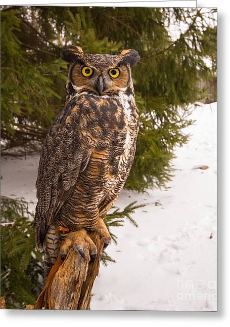 Great Horned Owl Greeting Card by Simon Jones