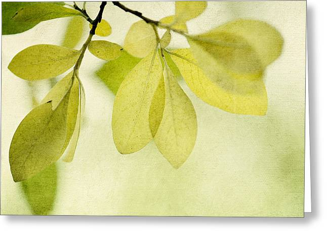 Green Foliage Series Greeting Card