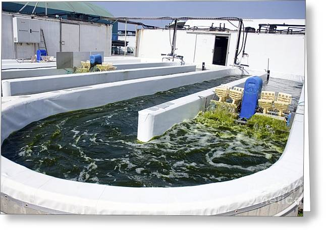 Growing Algae For Fish Food Greeting Card by PhotoStock-Israel