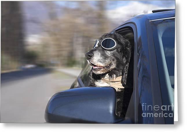 Happy Dog Greeting Card by Mats Silvan