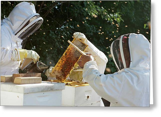 Harvesting Honey Greeting Card