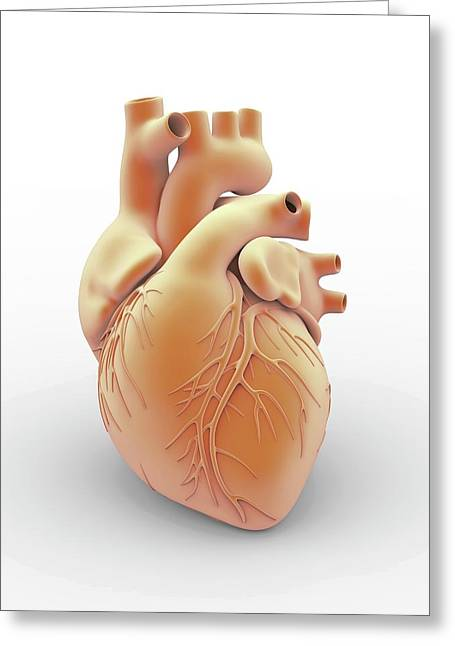 Heart And Coronary Arteries Greeting Card