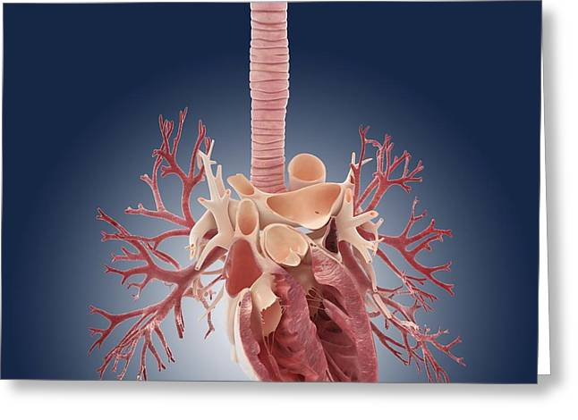 Heart And Lungs, Artwork Greeting Card