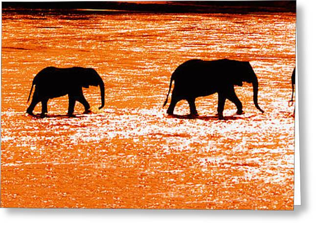 Herd Of African Elephants Loxodonta Greeting Card