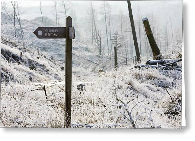 Hoar Frost On Vegetation Greeting Card by Ashley Cooper