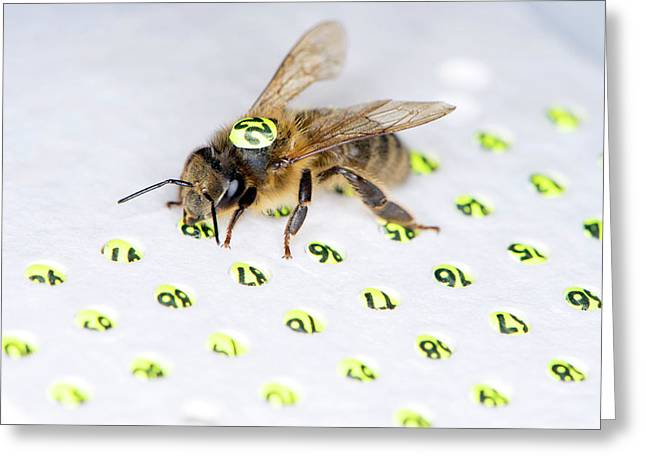 Honeybee Radar Tagging Greeting Card