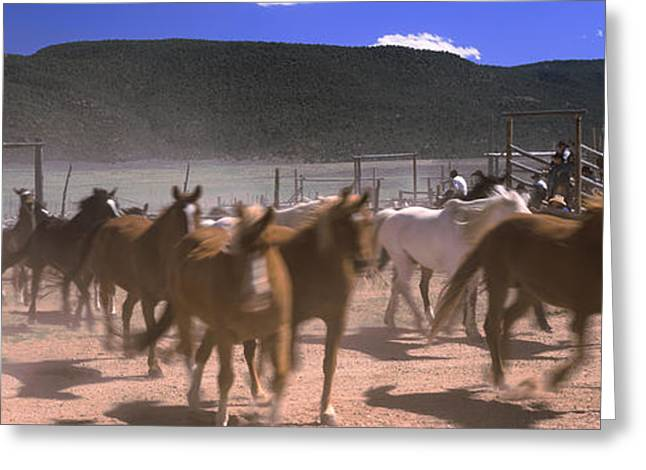 Horses Running In A Field, Colorado, Usa Greeting Card by Panoramic Images