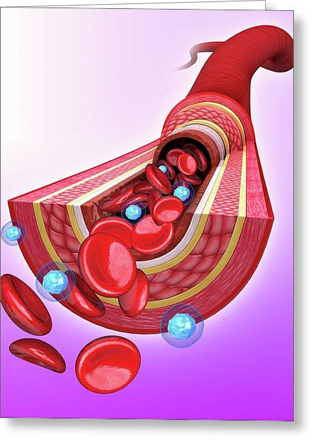Human Artery Greeting Card