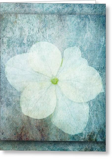 Hydrangea Greeting Card by Lynn Bolt