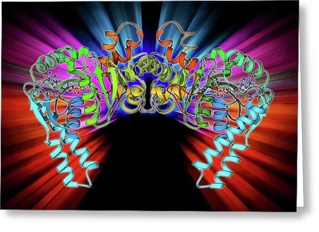 3-hydroxyacyl-coa Dehydrogenase Greeting Card by Laguna Design