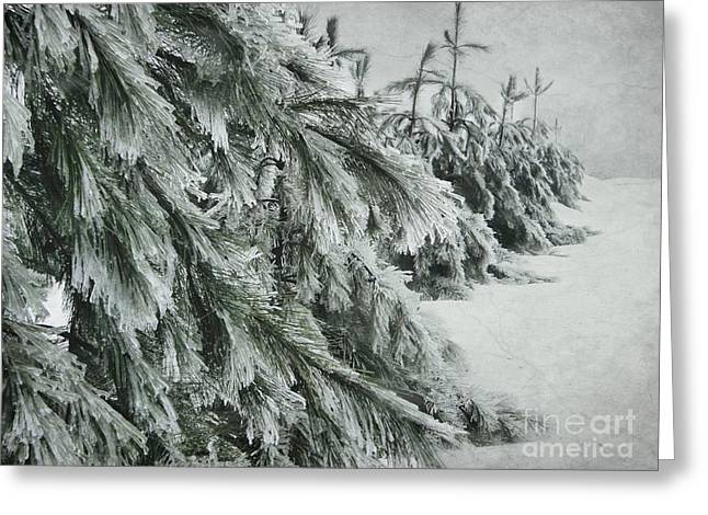 Ice Storm Greeting Card by Sophie Vigneault