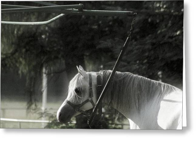 In The Captivity Greeting Card by Angel  Tarantella