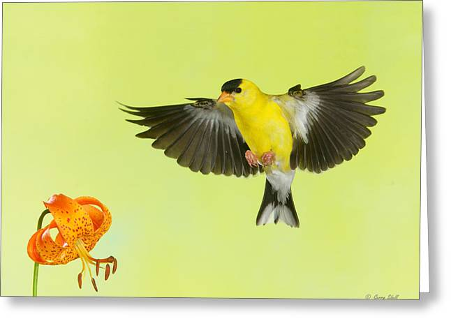 Greeting Card featuring the photograph Incoming by Gerry Sibell