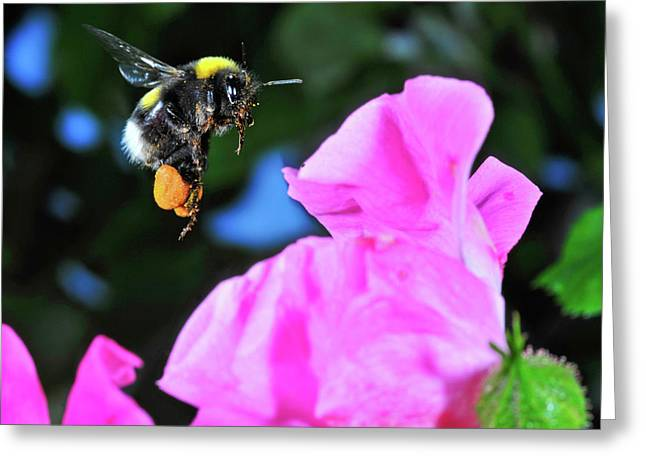 Insect In Flight, High Speed Greeting Card