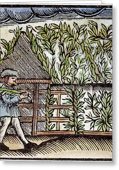 Jewish Holiday, 1663 Greeting Card by Granger