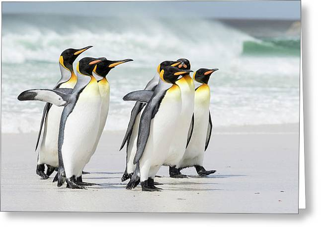 King Penguin (aptenodytes Patagonicus Greeting Card by Martin Zwick
