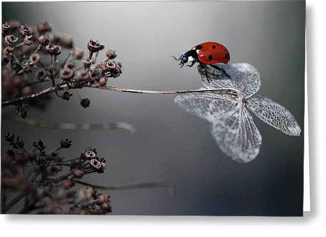 Ladybird On Hydrangea. Greeting Card