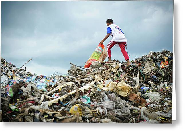 Landfill Scavenging Greeting Card