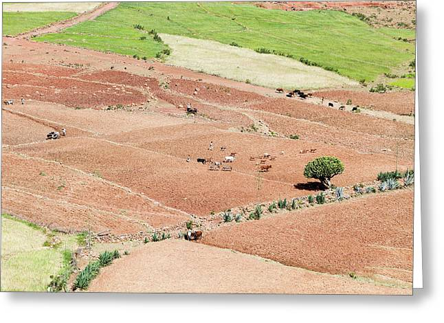 Landscape In Tigray, Northern Ethiopia Greeting Card by Martin Zwick