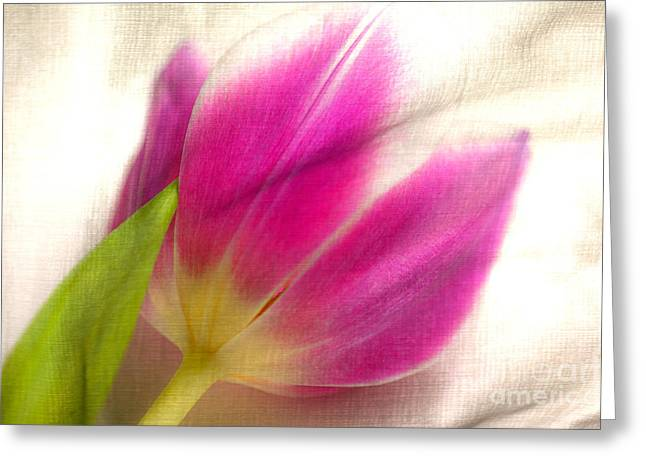 Linen Tulip Greeting Card by Bobbi Feasel