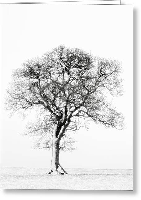 Lone Tree In Field Greeting Card