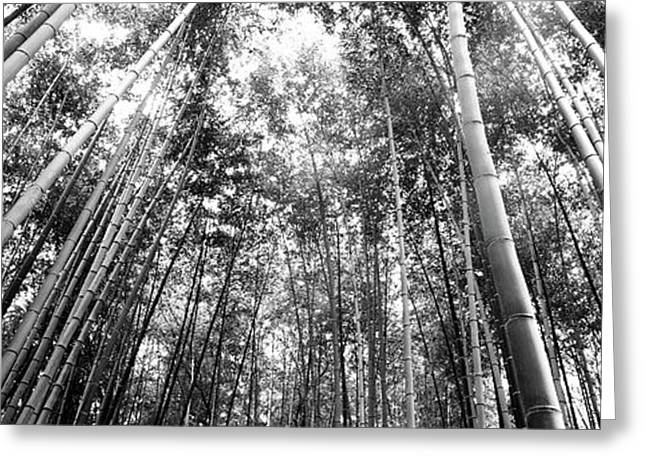 Low Angle View Of Bamboo Trees Greeting Card by Panoramic Images