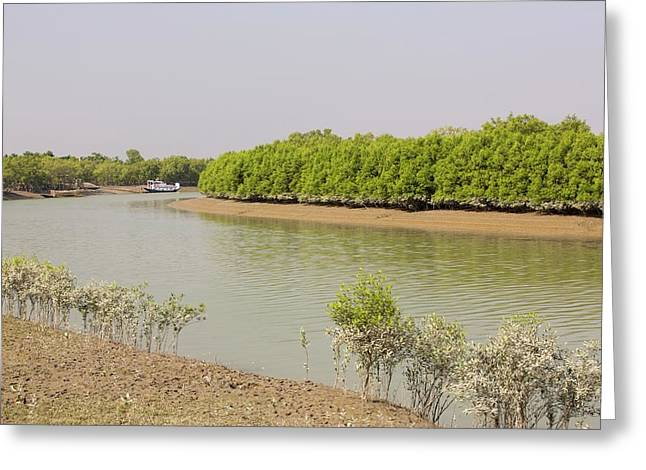 Mangroves In The Sunderbans Greeting Card by Ashley Cooper