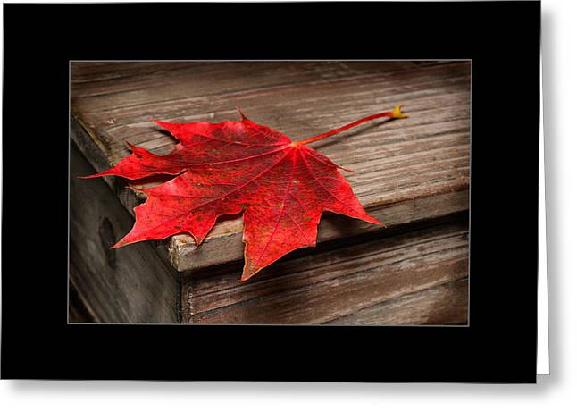 Maple Leafs  Greeting Card by Tommytechno Sweden
