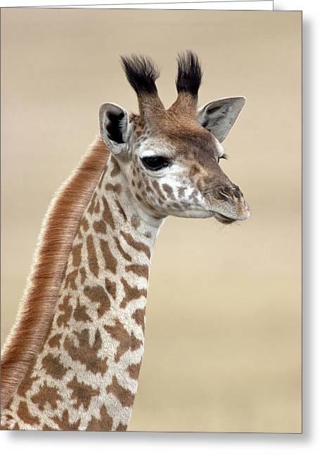 Masai Giraffe Giraffa Camelopardalis Greeting Card