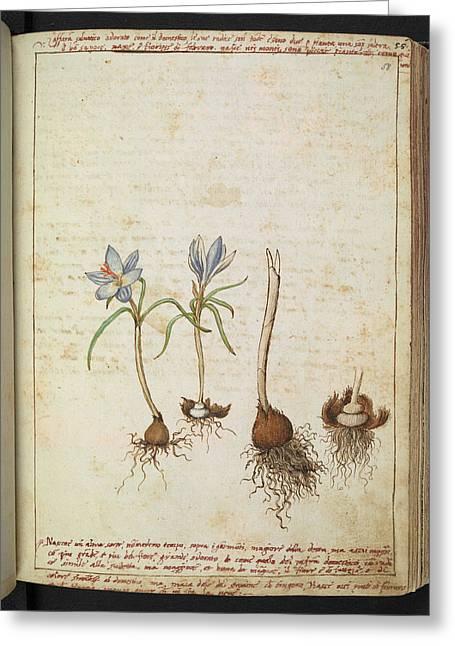 Medicinal Plants Greeting Card by British Library