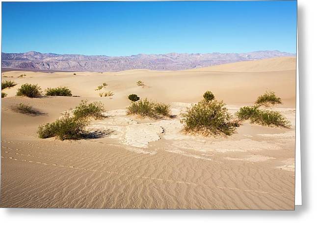 Mesquite Flat Sand Dunes Greeting Card