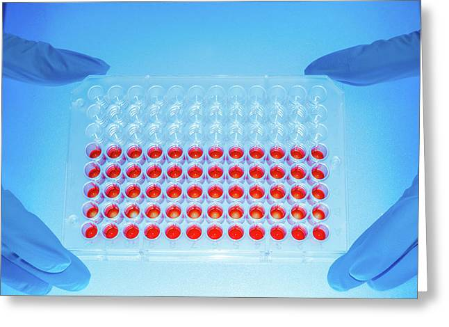 Microbiology Samples In Multiwell Tray Greeting Card by Wladimir Bulgar