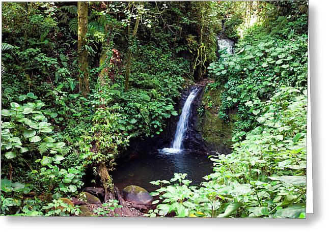 Monteverde Cloud Forest Reserve, Costa Greeting Card